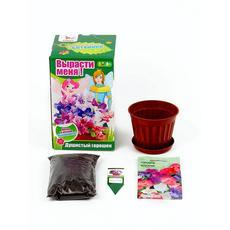 """Ботаника. Вырасти цветы в горшке """"Душистый горошек"""" 15135010 1"""