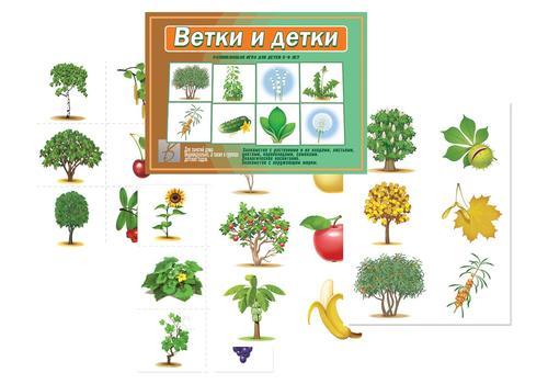 """Методическое пособие. """"Ветки и детки"""" Д-512 1"""